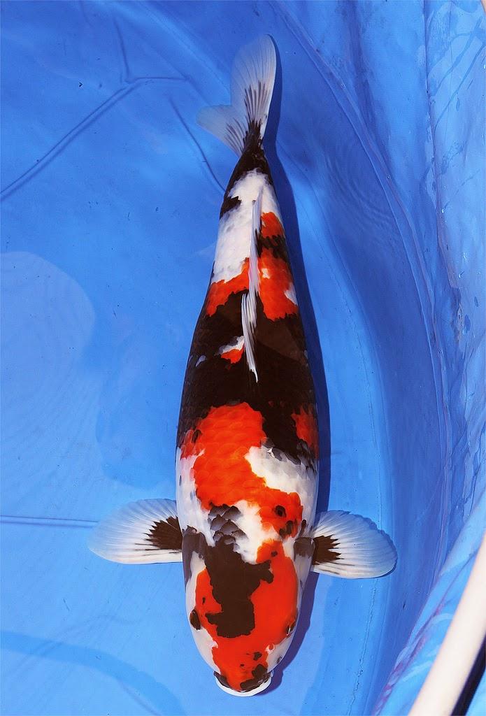 13 Best Freshwater Fish For Your Home Aquarium  Fish