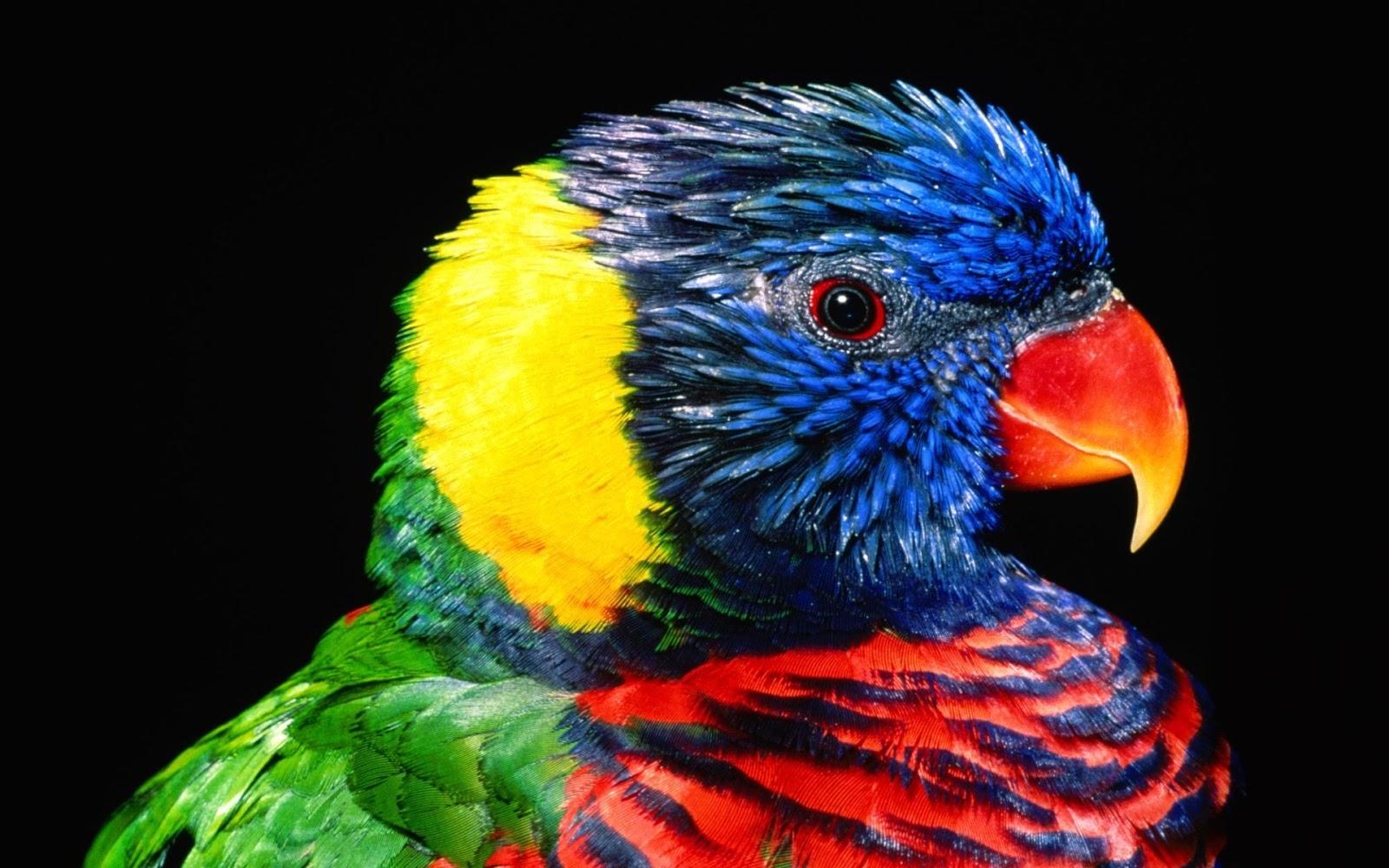 http://1.bp.blogspot.com/-H3jyqyXuzC8/UOLz0QCdGWI/AAAAAAAACVQ/rba1VTwSMX8/s1600/Parrots+bird+(Files+Gallery)+(5).jpg