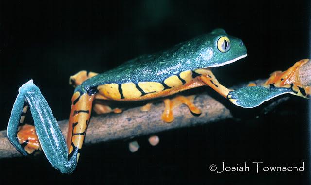 Imag Animales Honduras_1