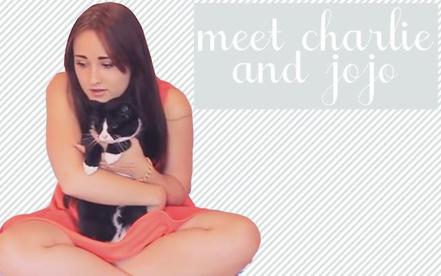 Cat introduction charlie jojo youtube video