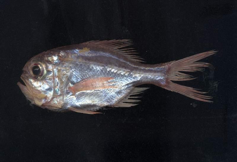Artes de Pesca: VAMOS A PESCAR RELOJ