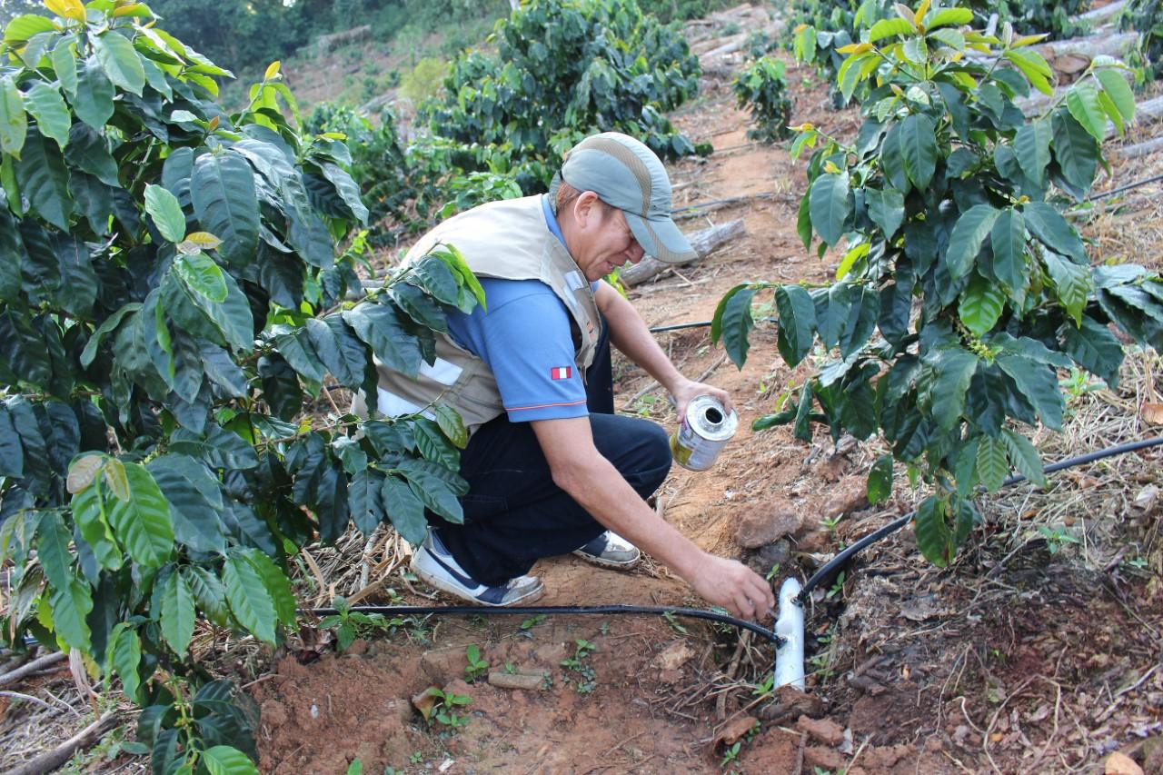 Instalan módulo de café con riego tecnificado Promovido por el Gobierno Regional de San Martín en l