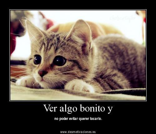 Ooooh, quiero acariciar al gato^^