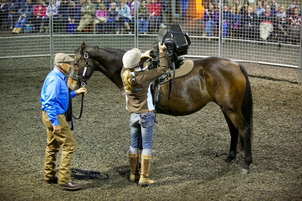 Monty Roberts Join Up Tour