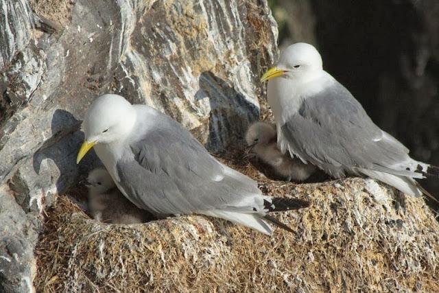 Observando a las aves en los acantilados de Latrabjarg, Islandia