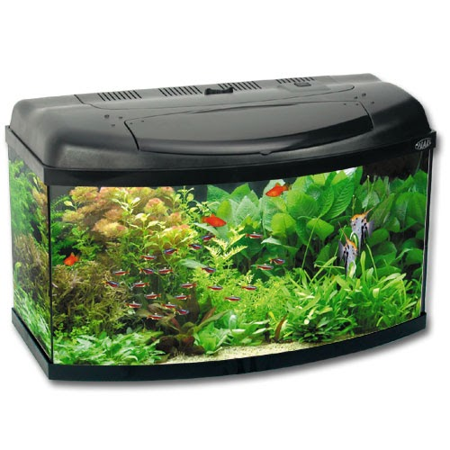 Glonojady akwarium for Peces para acuarios pequenos