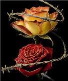 En el día de San Valentín