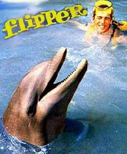 Flipper, arrête de flipper.