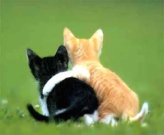 صور لحيوانات في لحظات نادرة لن تتكرر 16.jpg