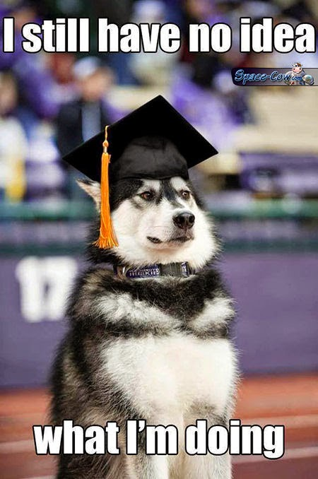 funny dog pics humor