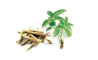 planta adaptogenica