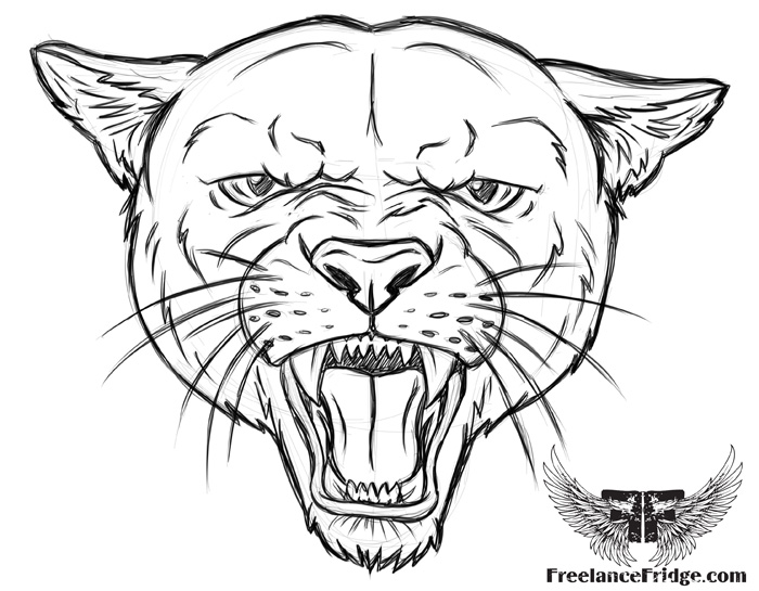Cougar Face Line Drawing : Bold drawings cougar coloring pages