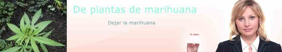 De Plantas De Marihuana