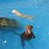Μα πώς κολυμπάω (βίντεο)...