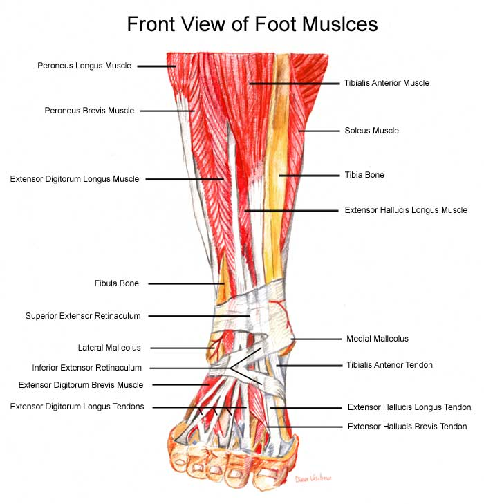 Muscle pain in the bottom of foot