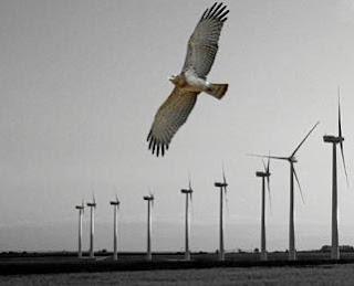 las aves y las turbinas eolicas