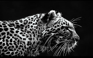 Leopard-Black-and-white-theme-dark-BG-HD-wallpaper.jpg