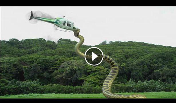 animal clip168 big anaconda in amazon