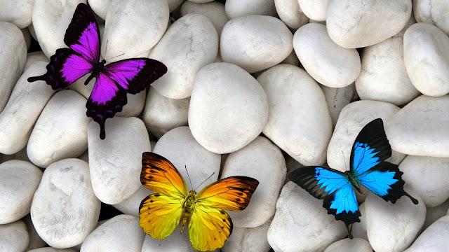 Fondo de Escritorio de Hermosas Mariposas de Colores