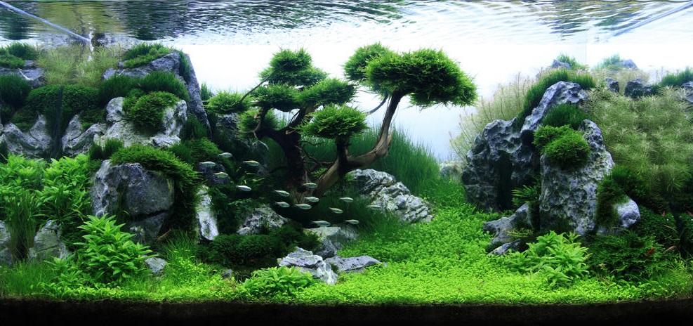 Cara membuat aquascape murah dan sederhana untuk pemula cara budidaya ikan - Gambar aquascape ...