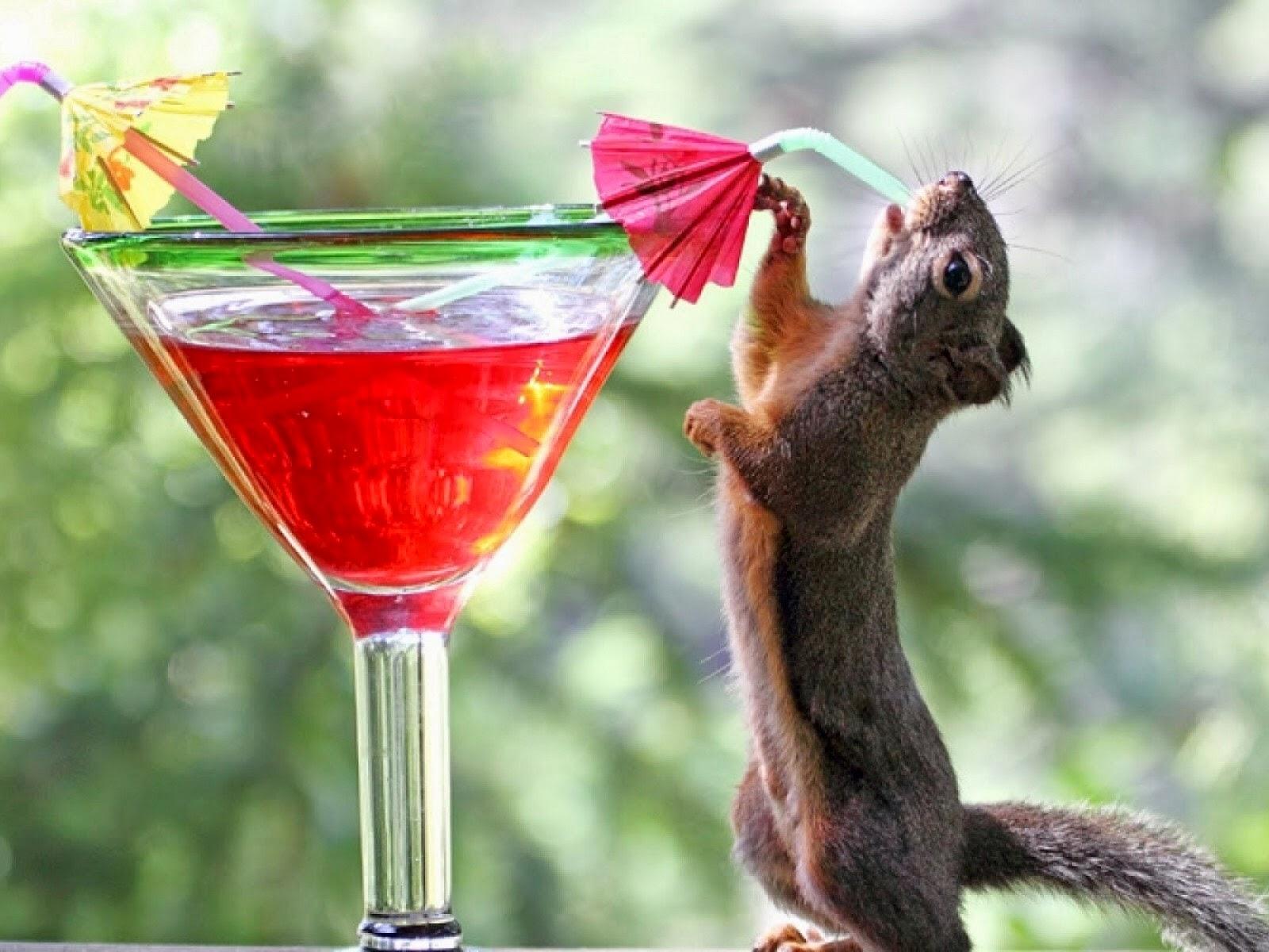 Bebiendo cócteles
