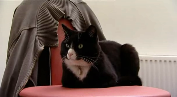 James May's late cat.