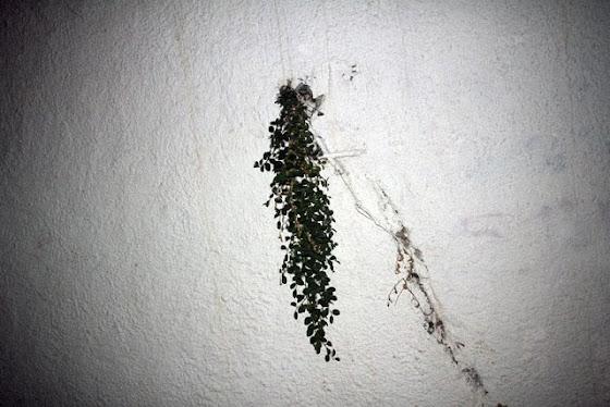 diptych - dirty photos