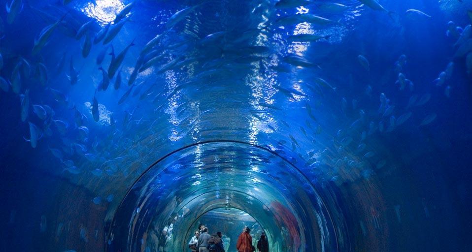Valencias Aquarium : Aquarium in the Oceanografic Park of Valencia, Spain (? Rudi ...