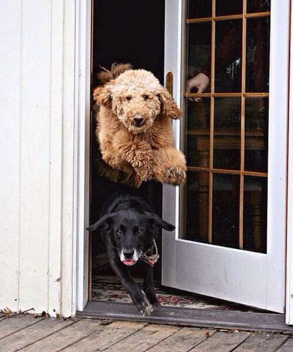 Cute dogs - part 6 (50 pics), dogs running to outside