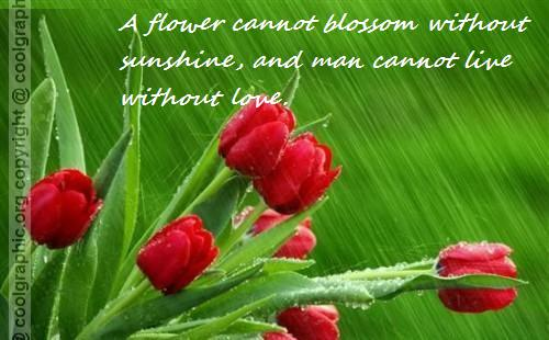 quotes about love and flowers quotesgram
