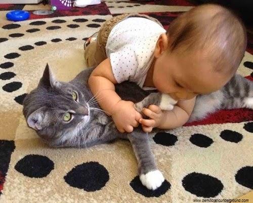 Bébé drôle et chat
