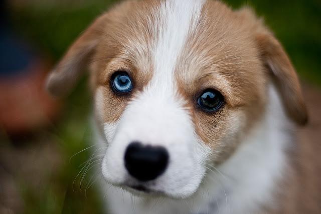 những chú chó dễ thương, xinh xắn nhất