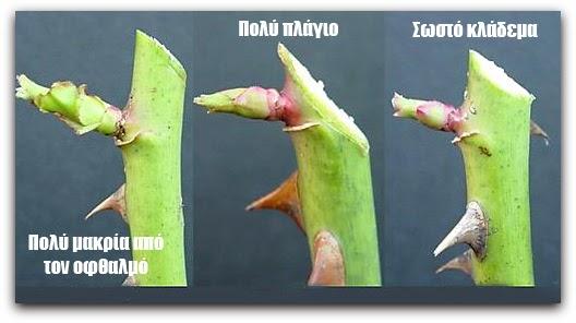 Αποτέλεσμα εικόνας για κλαδεμα κατεστραμμενων φυτων χειμωνα
