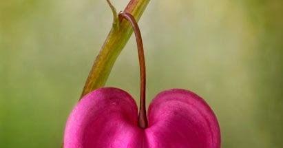 international garden photographer of the year 2013, the