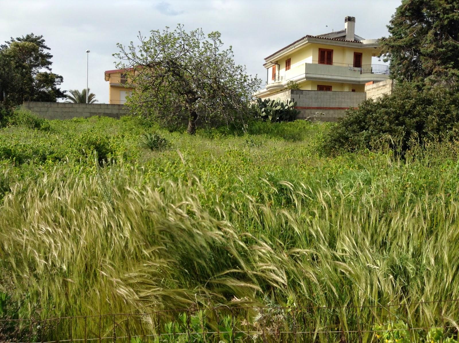 Barraccamanna - Sardinian suburb landscape