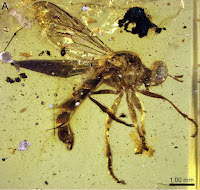 http://sciencythoughts.blogspot.co.uk/2014/06/robber-flies-from-cretaceous-amber.html