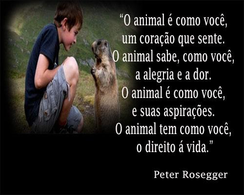 Frases Para Pensar Respeito aos Animais