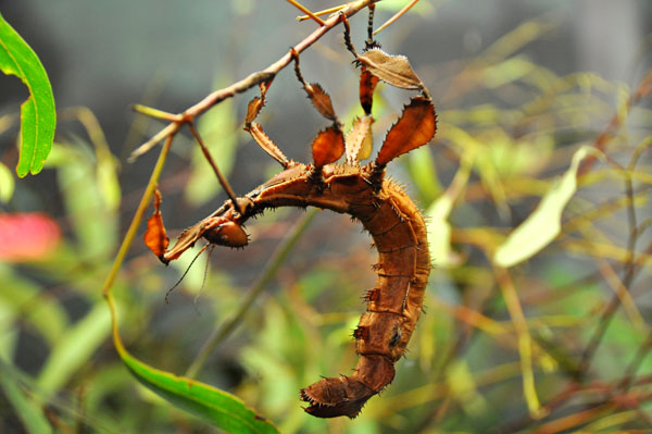 reptile park stick insect