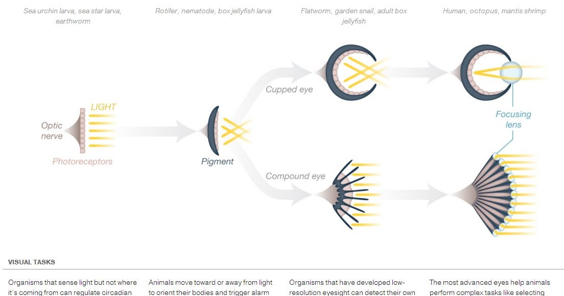 chemical evolution on earth The following version is section 6 in my test-case for naturalism page: the science of chemical evolution (medium) in an attempt to explain how the origin of carbon-based life on earth.