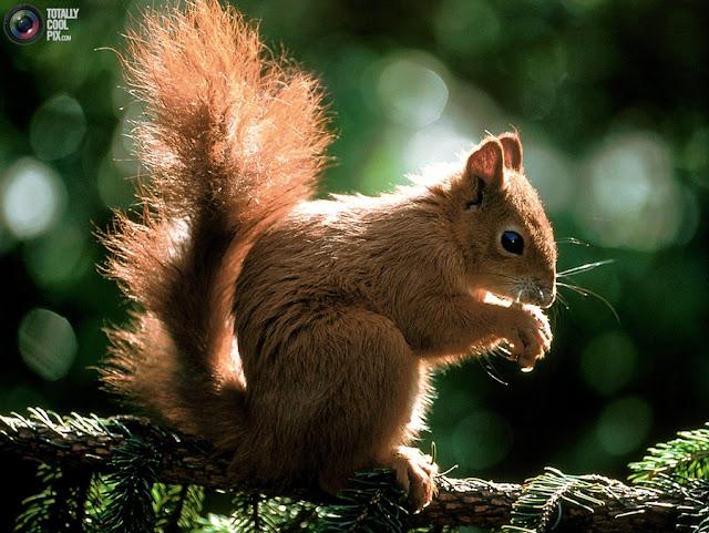 красивые фото животных