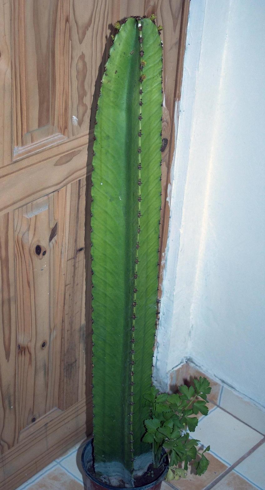 Mis cactus suculentas y demas mis inicios con los cactus for Cactus y suculentas