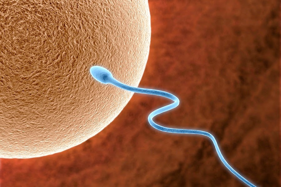 L arginine for low sperm count