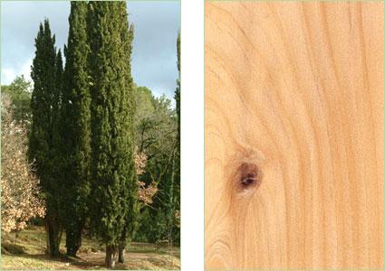 Compro legni ondulati per esterno for Pagani case prefabbricate