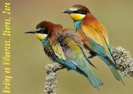 BIRDWATCHING EN VILLUERCAS, IBORES, JARA.
