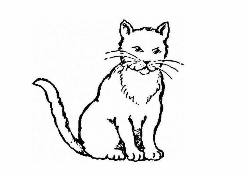 Colour Drawing Free Wallpaper Cat Coloring Drawing Free Realistic Cat Coloring Pages