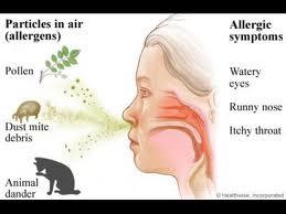 Remedii naturiste pentru rinita alergica