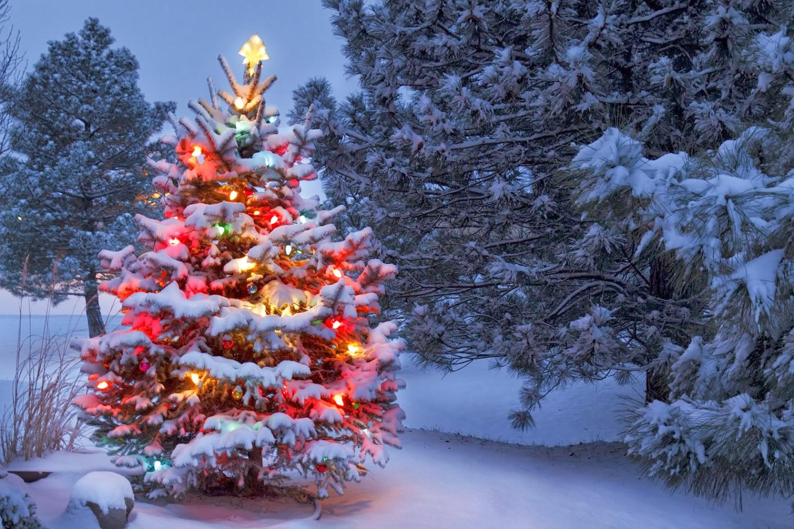 ♥★One day... PARADISE ★♥ - Página 39 Postales-navide%C3%B1as-con-arbolitos-o-pinitos-de-Navidad-Christmas-tree-+%2815%29
