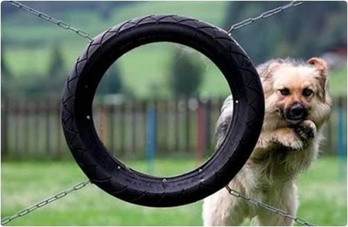 Cachorro saltando errado