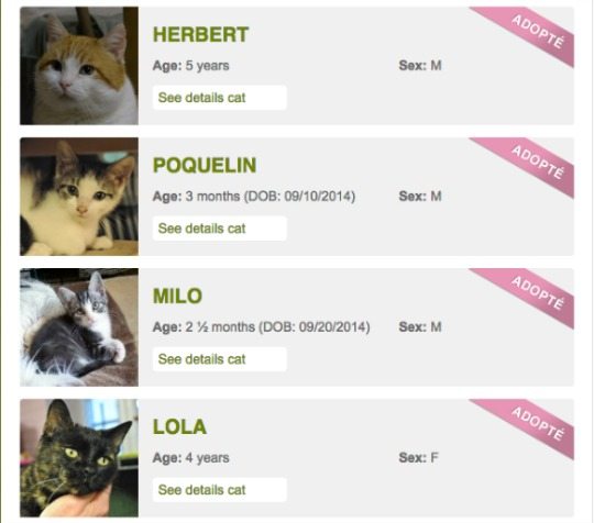 cat rescue adoptions
