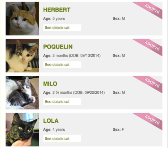 cat rescue adoptions